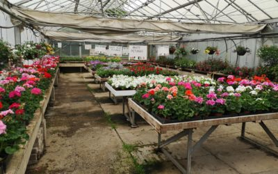J.E. Jefferies Nursery